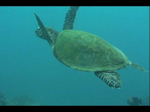 nice-turtle-tortuga-costa-rica.html
