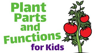 Plant Parts and Functions   First and Second Grade Science Lesson For Kids