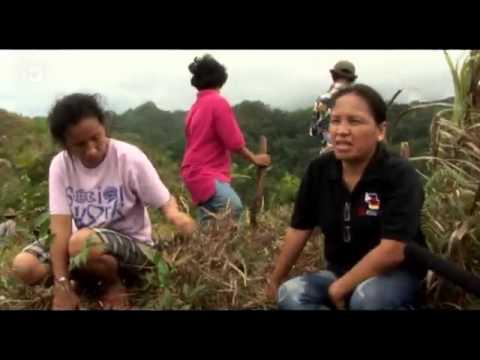 Philippines: Trees vs. Farmland   Global 3000