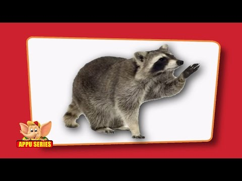 Flash cards for children - Wild Animals