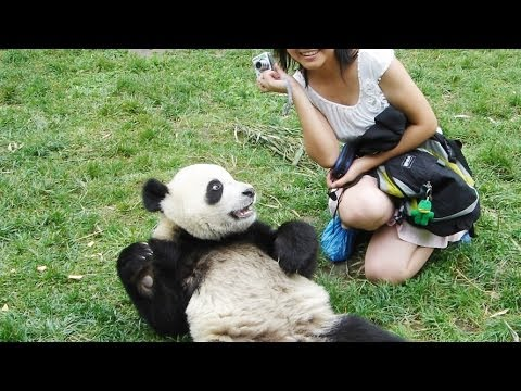 Girl Feeding Cute Baby Panda Milk[HD]
