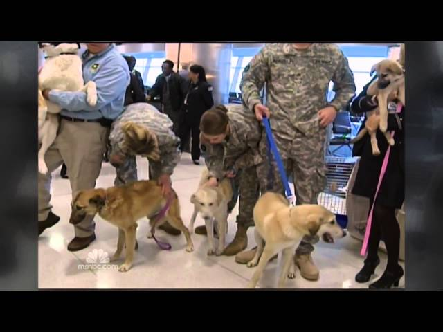 American Dog Rescue on NBC Nightly News