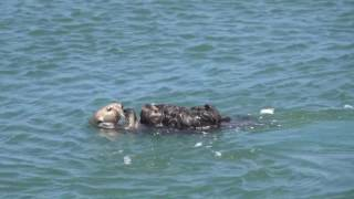 Mom shows off incredibly cute baby Sea Otter