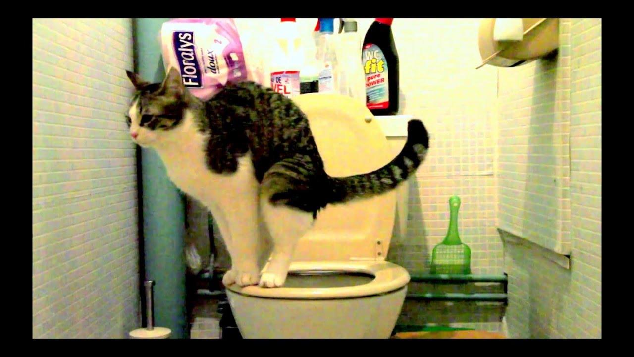 Mon Chat Va Aux Toilettes Et Tire La Chasse D Eau Comme Un