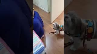 Lol! Anjing pun tak suka dia...  原來狗的天敵是...
