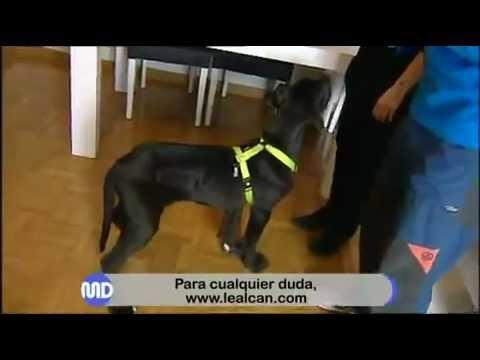 Pre - adiestramiento cachorros