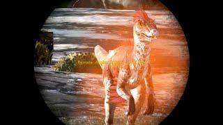 how to make kibble in ark evolved