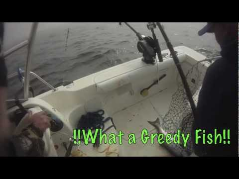 DEEP SEA KING SALMON FISHING IN NORTHERN CALIFORNIA