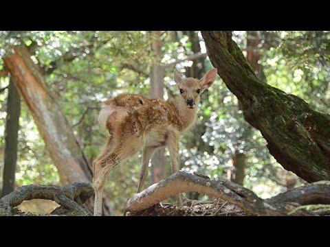 真夏の鹿たち、表情豊か 奈良