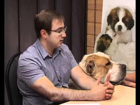 Видео как выбрать щенка алабая
