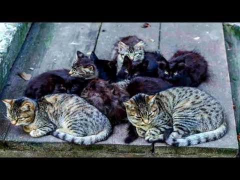 Kids Can Help Animal Shelter Program