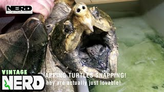 Snapping Turtles are not what most people may think!