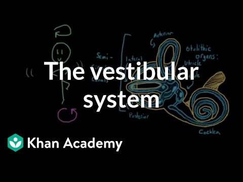 The vestibular system, balance, and dizziness