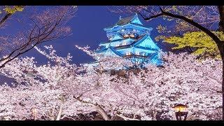 Lâu đài OSAKA, thành cổ nổi tiếng của Nhật Bản / OSAKA Castle, famous ancient city of Japan