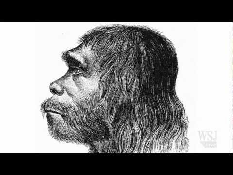Why Humans Outlasted the Neanderthal