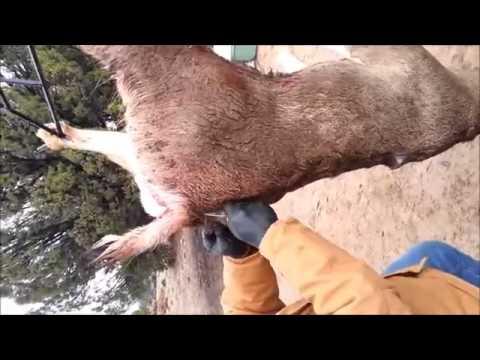 Deer hunting knife sharpener