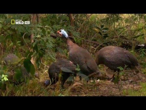 Дикая река Конго: Река чудовищ / 2013 HD 720p