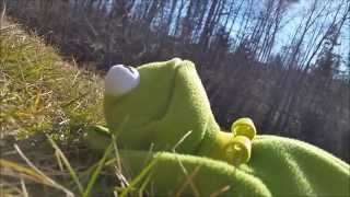 "Kermit The Frog sings ""Teenage Dream"" (Katy Perry)"