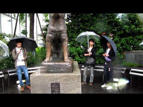Buscando  A Hachiko  Shibuya Tokio  Japon video