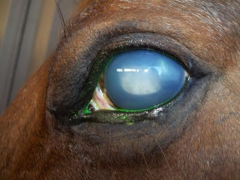 Welding Around Horses Can Blind Your Horse - Protect Your Animals From Welders