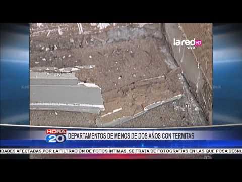 Termitas amenazan condominio en El Bosque