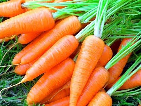 Мой способ посева моркови – ни разу не подвел (Рязанская область)