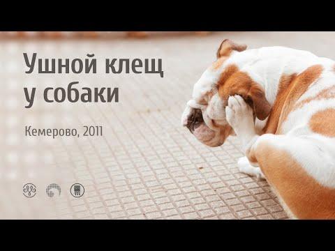 РИЦИНИОЛ применение ушной клещ у собаки Кемерово 2011