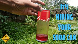 I Hiding Your Can | Soda Can Vs NaOH | Random Experiment