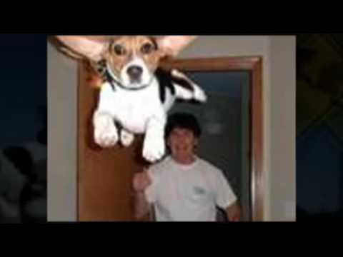 dogs funny picture video cute dogs crazy dogs funy lol Video