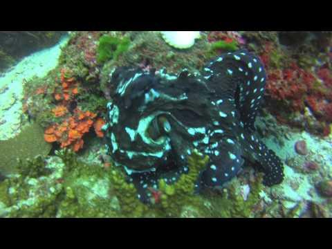 Два огромных осьминога на Пхукете