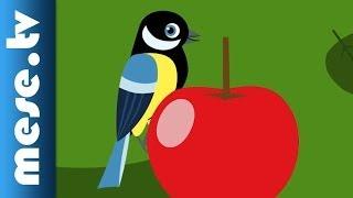 Gryllus Vilmos : Bioalma (gyerekdal, mese, Félnóta sorozat)