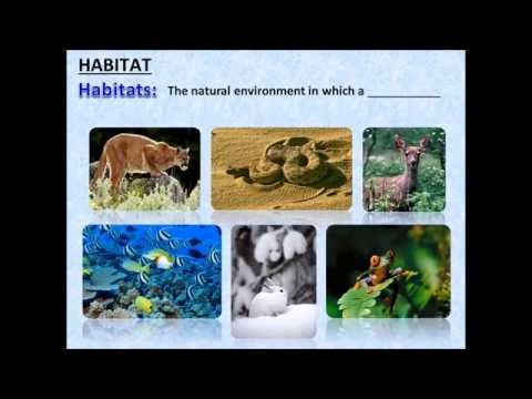 Introduction To Ecosystems - Powerpoint - Tangstar Science video