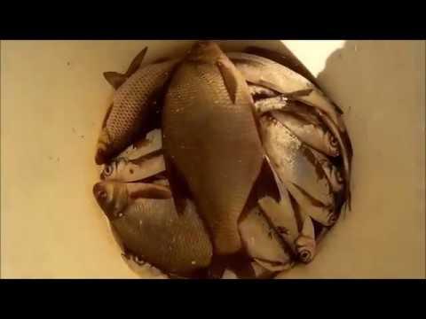 залив верблюд киев рыбалка