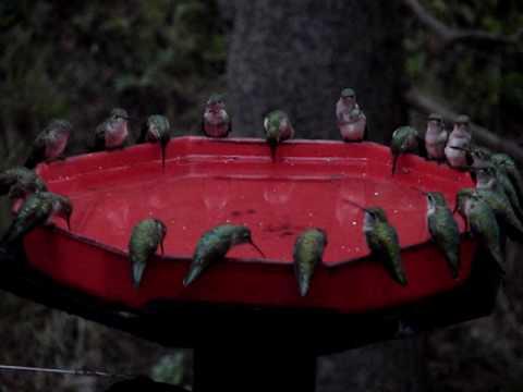 World S Largest Hummingbird Feeder Dzerres Swarm