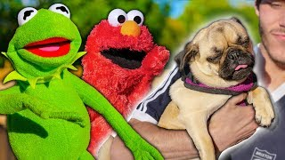 Kermit The Frog and Elmo Buy a NEW Puppy!