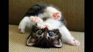 Top hình ảnh mèo con dễ thương nhất!!!