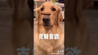 沙雕 动物 励志 教育1 funny tiktokchina animals education
