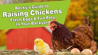 Becky's Guide to Raising Chickens - Fresh Eggs & Fun Pets In Your Backyard