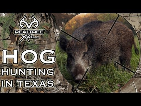 Hog Hunting with a knife in Texas