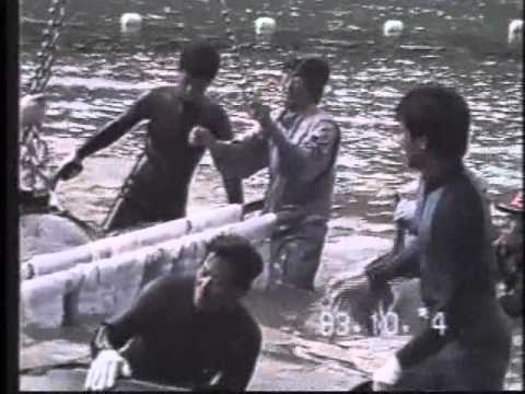 Seaworld are responsible for the taiji dolphin slaughters