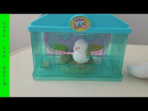Литл лайв петс цыпленок вылупился и ИСПУГАЛ ребенка / Little live pets bird / Интерактивная игрушка