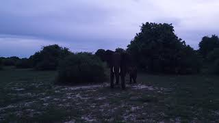 Day 29 - Chobe National Park, Botswana - Elephants
