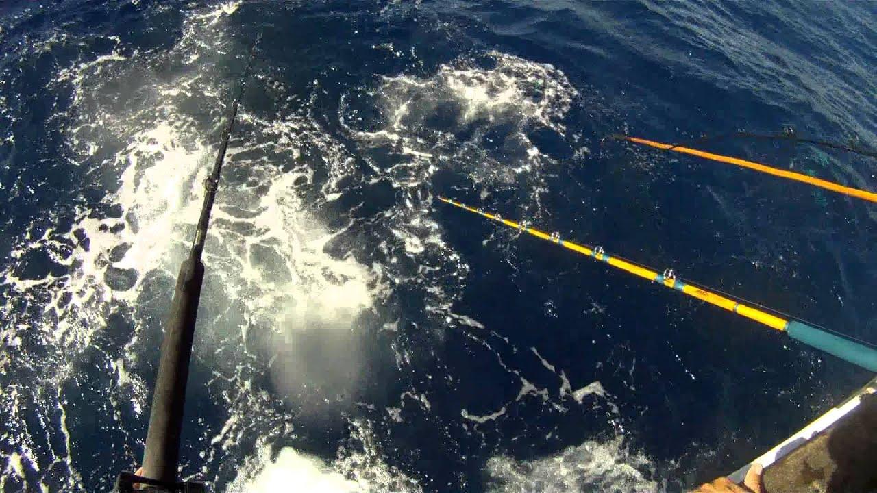 El capitan sportfishing 2 5 day oct 5th 7th 2012 w for Knights landing fishing report