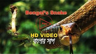 Bengal's Snake. বাংলার সাপ