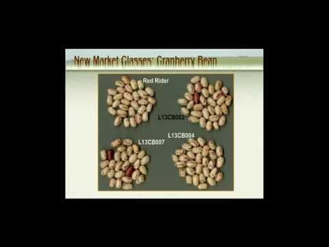 Learn About Pulses: Legumes, Beans & Peas