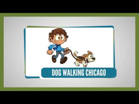 Want To Train Dog? We are dog walkers Chicago! - smartpawschicago.com