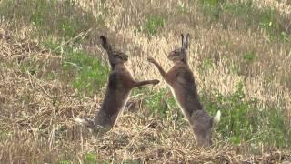 Teyzesine Tavşan Sikişi Yapıyorlar Türkçe Altyazı
