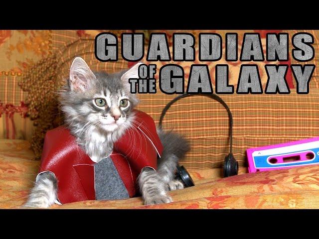 Guardians of the Galaxy (Cute Kitten Version)