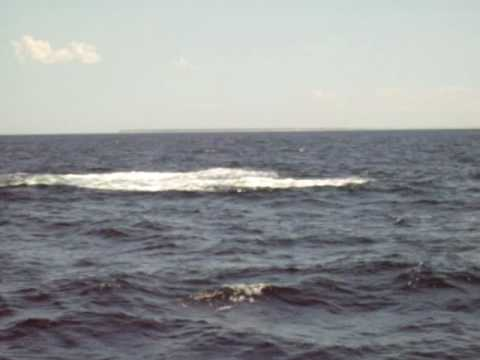 40-foot-humpback-whale-jumping-out-of-the-ocean.html