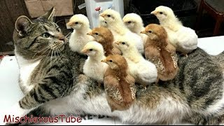 Try Not to Laugh or Grin: Funny Cats Compilation   Funny Cat Videos [part 2]